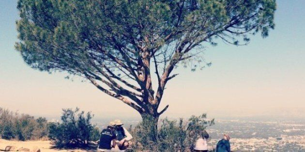 Take a Whimsical Hike in the Hollywood