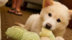 WATCH: Doctor Saves Puppies From Being