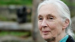 Jane Goodall Questions the Safety of