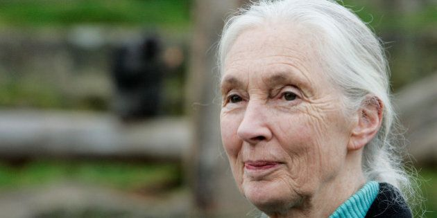 SYDNEY, AUSTRALIA - OCTOBER 11: Dr Jane Goodall poses for a photo at Taronga Zoo on October 11, 2008...