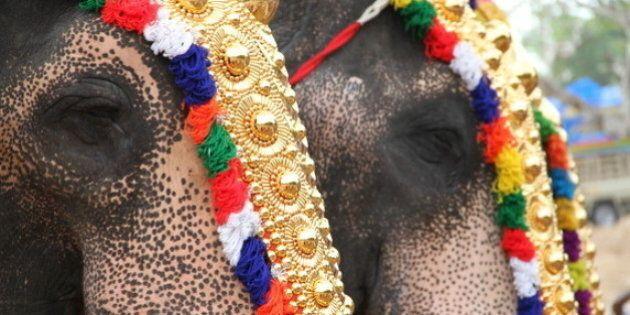 Season for Elephant Torture Is Underway in Kerala,