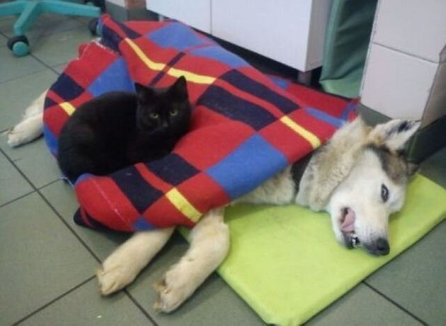 Polish Nurse Cat, Rademenes, Comforts Sick Shelter Animals Until They Feel