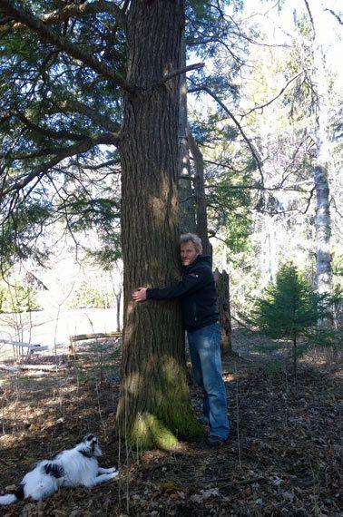 I Hugged a Tree and I Liked