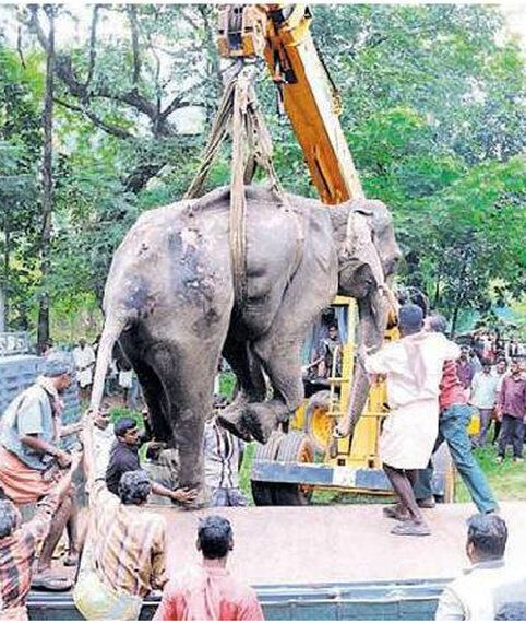The Human Elephant Conflict in Kerala Has Deadly