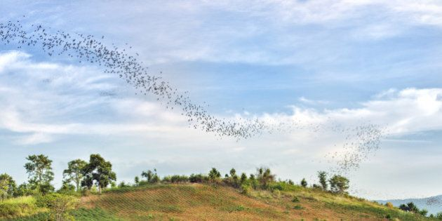 This is a horizontal, color photograph of the bat migration over the scenic landscape in Khao Yai National...