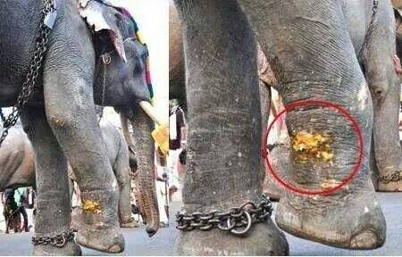 When Elephants Are Confined it's No Wonder They Get