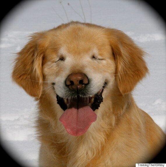 Smiley The Blind Therapy Dog Brings Joy To Everyone He
