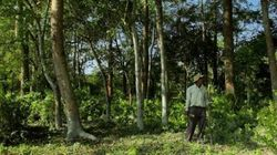 One Man Single-Handedly Planted A Forest Bigger Than Central