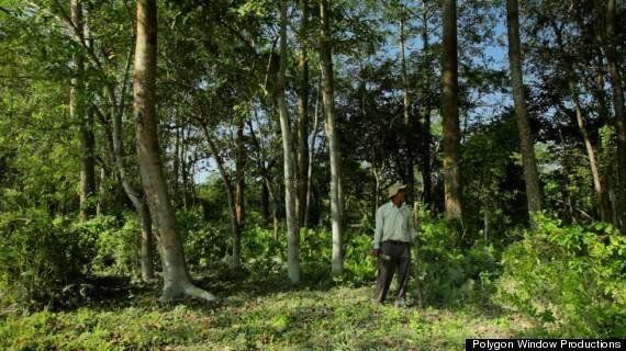 One Man Single-Handedly Plants Forest Bigger Than Central