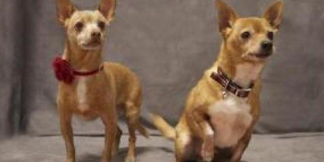 Adopt-a-HuffPet: Why Two Dogs Are Better Than