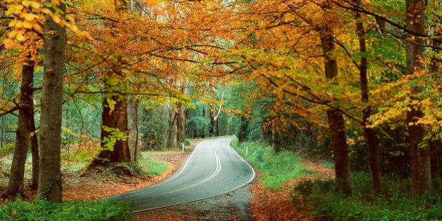 The Best Places For Autumn Leaves, As Chosen By Lonely Planet