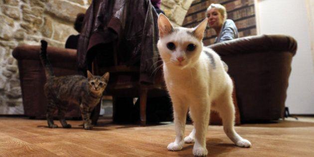 Paris Cat Cafe, Cafe Des Chats, Opens In City's Marais