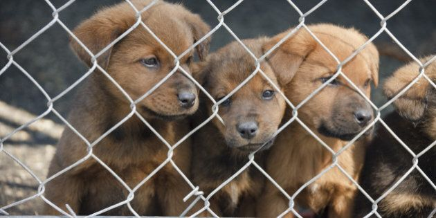 Happy World Animal Day -- Let's Stop Puppy Mills! | HuffPost