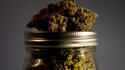 Medical Pot Lawsuits Piling