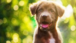 Looking At Puppies Could Actually Improve The Quality Of Your