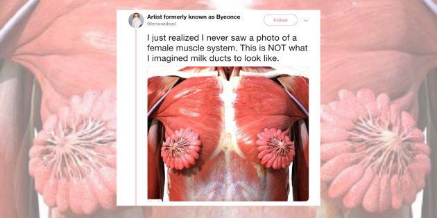 A viral photo of the female anatomy is making the rounds
