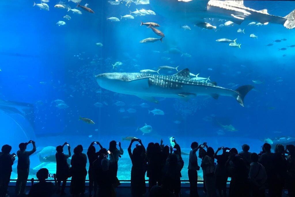 ▲沖繩北部景點推薦-沖繩美麗海水族館。(圖/Tripbaa趣吧!亞洲自由行專家)