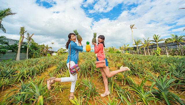 ▲沖繩北部美食景點-名護鳳梨園。(圖/Tripbaa趣吧!亞洲自由行專家)