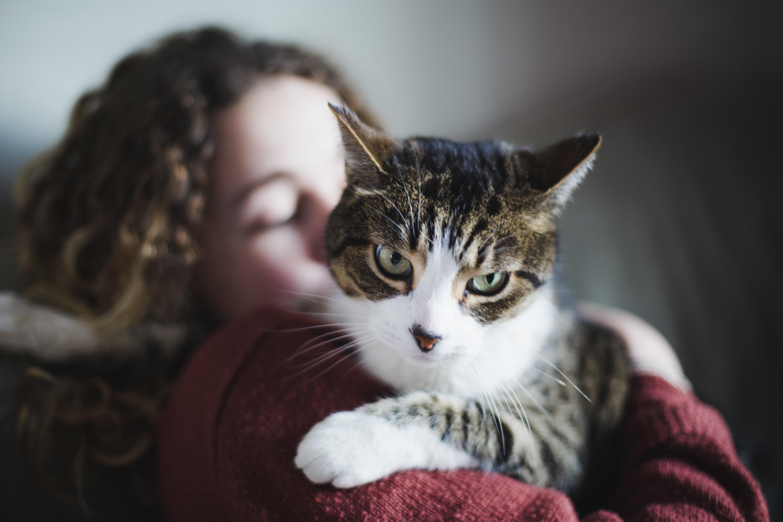 Dona da gata que entrou na Justiça teve duas derrotas nas instâncias