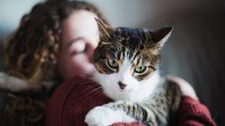 STJ decide que condomínio não pode proibir morador de criar animal de
