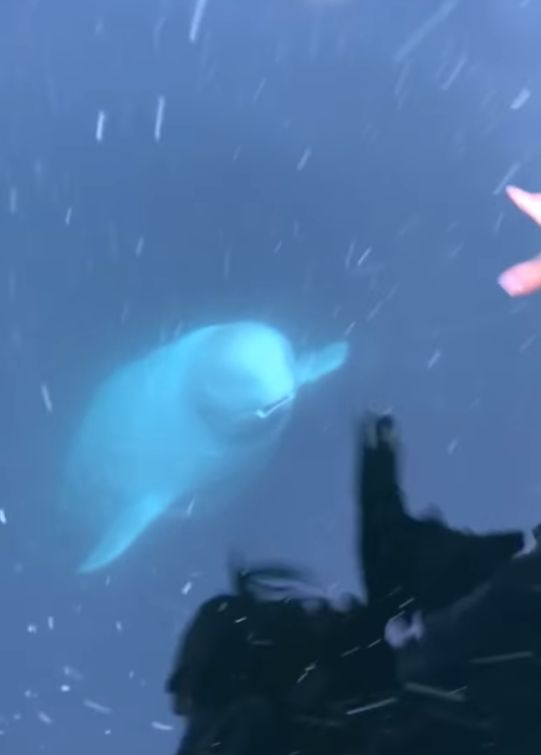 러시아 스파이로 추정되는 벨루가가 바다에 떨어뜨린 휴대폰을