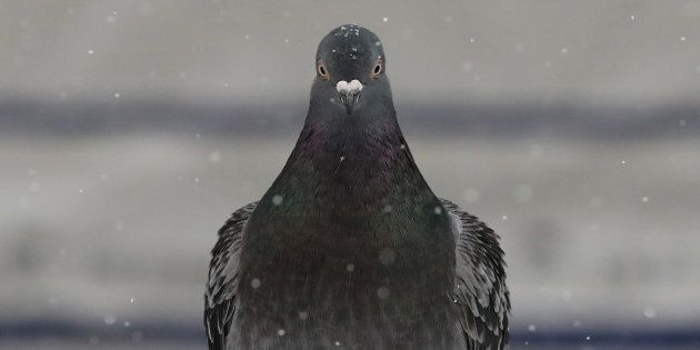 A pigeon hangs out in the snow outside Union Station on Feb. 10,