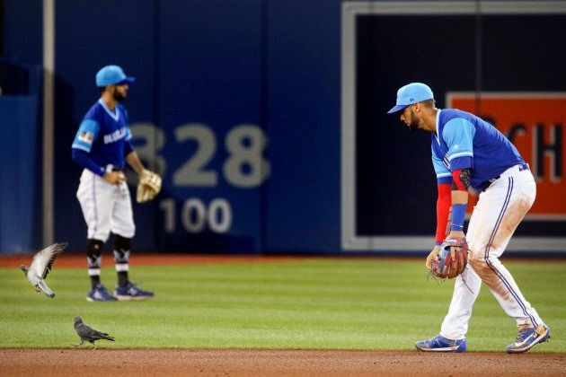 Toronto Blue Jays Lourdes Gurriel Jr. shoos away pigeons from his shortstop position at the Rogers Centre...