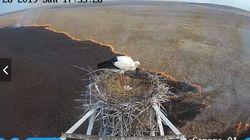 火の海に囲まれた荒野で、卵を守るコウノトリ⇒無事にひな鳥が生まれる