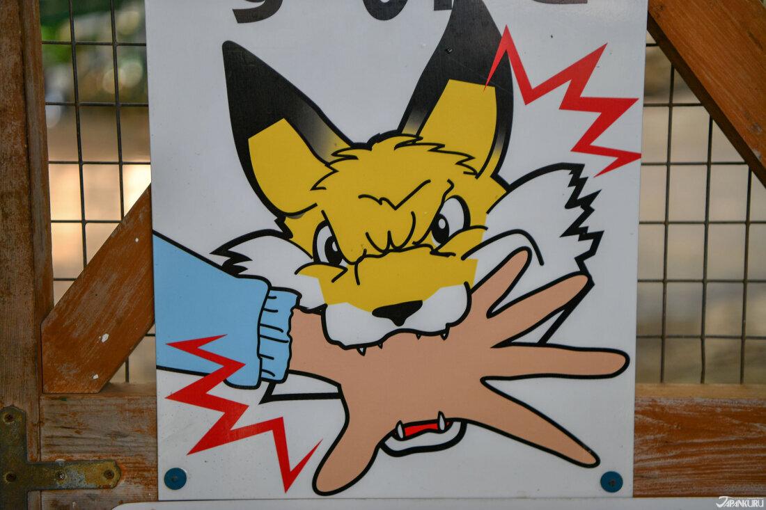 雖然這裡的狐狸溫和,但都未經馴化,還是要小心唷!
