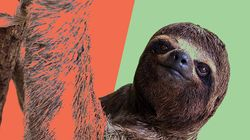 Sloth Has Glorious Reaction To Helpful Human Who Helped It Cross The