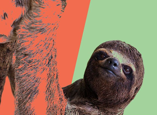 5 Cute Animals To End The Week: Sloth's Glorious Reaction To Helpful