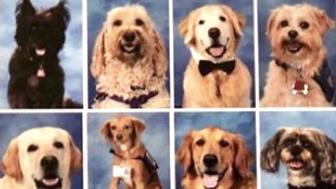 Parkland therapy dogs in yearbook