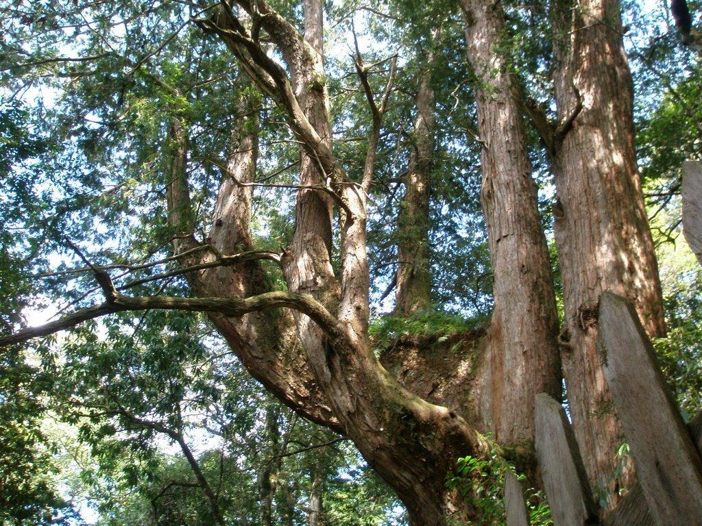 ▲新竹景點推薦-鎮西堡神木群。(圖/Tripbaa趣吧!亞洲自由行專家)