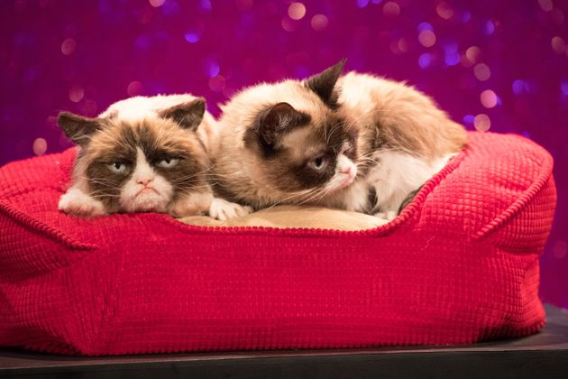 Grumpy Cat, Online Pet Sensation, Dead At