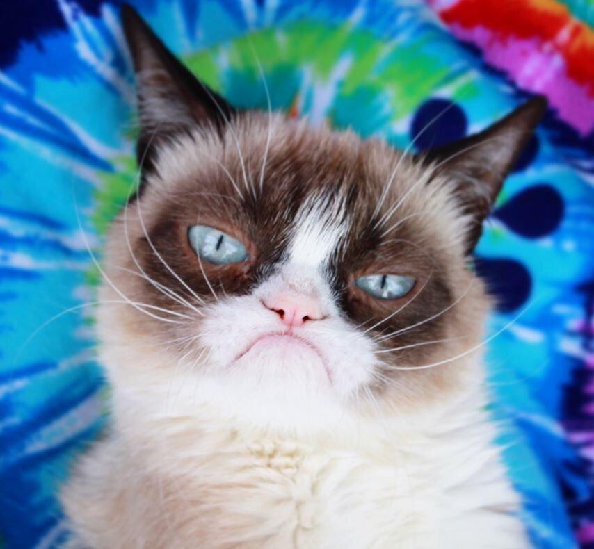 È morto Grumpy Cat, il gatto più ricco e social del