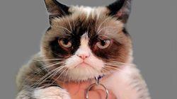엄청난 팬을 둔 스타 고양이가 7세의 나이에 무지개다리를