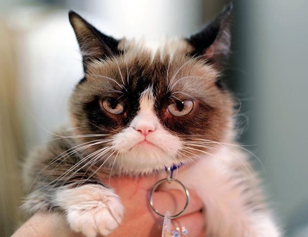 Grumpy Cat: A triste despedida à gatinha mais rabugenta e querida da