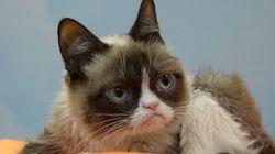 18 Unforgettable Photos That Made Grumpy Cat An Internet
