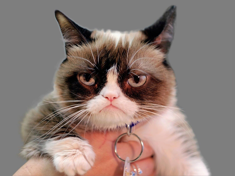 A triste despedida de Grumpy Cat, a gatinha mais rabugenta e querida da