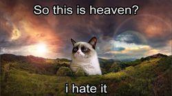 Grumpy Cat (2012-2019): Η πιο διάσημη γάτα του Ιντερνετ πέθανε