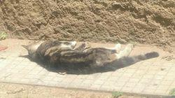 Bidello uccide un gatto a bastonate davanti ai bambini della scuola elementare. Proteste e