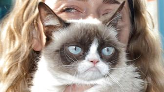 SANTA MONICA, CA - JULY 23:  Grumpy Cat makes an appearance at Kitson Santa Monica to promote her new book 'Grumpy Cat : A Grumpy Book' on July 23, 2013 in Santa Monica, California  (Photo by Tibrina Hobson/Getty Images)