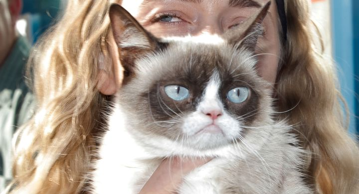 Grumpy Cat, one of the internet's most beloved celebrity cats, died on Tuesday at the age of 7.