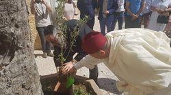 Pour la fraternité, musulmans, chrétiens et juifs plantent des oliviers au Maroc et à