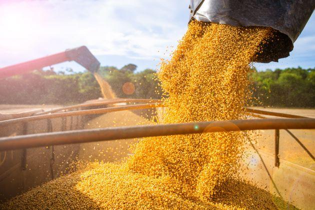 Les producteurs de grains appellent à l'aide
