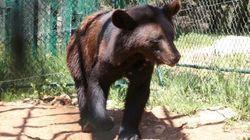 Une réserve pour soigner les animaux traumatisés par la