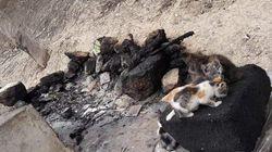 Ouverture d'une enquête suite au massacre de chats à