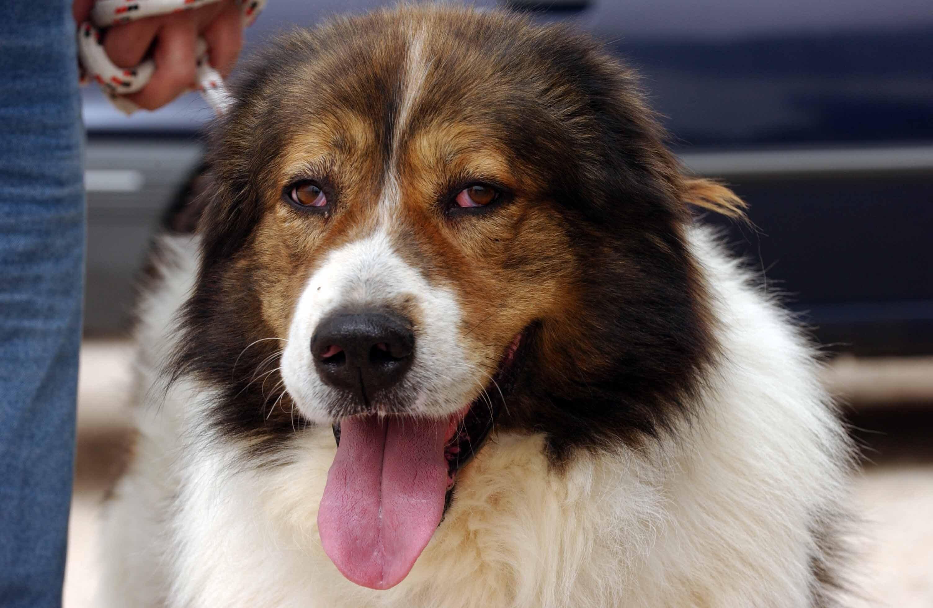 Κέρκυρα: Βαριά καμπάνα για 67χρονο που πυροβόλησε τον σκύλο