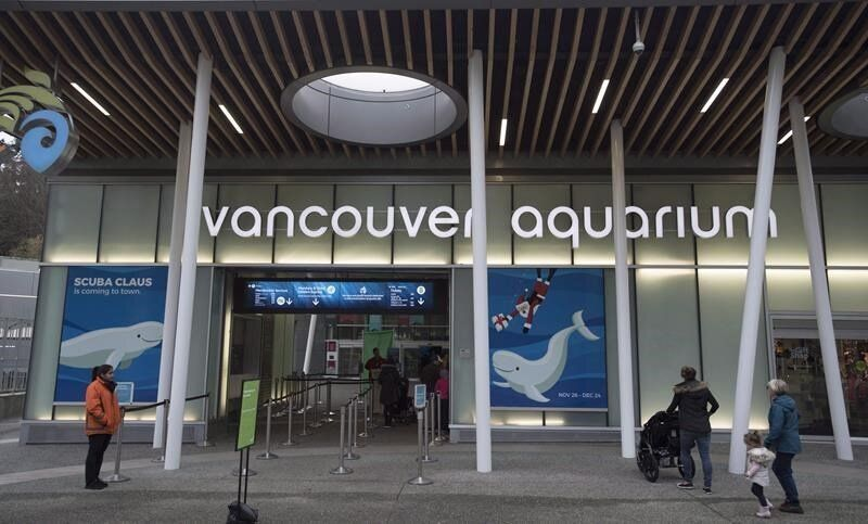 Vancouver Aquarium Suing City For Money Lost Over Whale, Dolphin