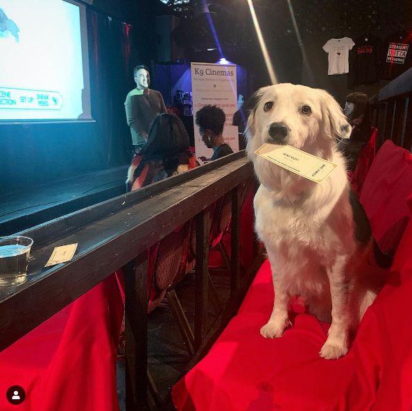 犬と一緒に行ける映画館が話題。しかも15ドルでワインも飲み放題